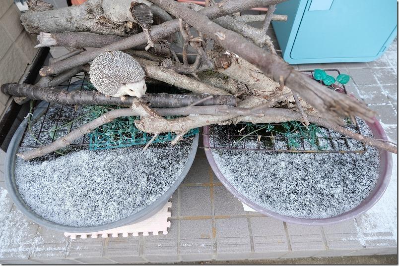 冬に凍ったメダカの水鉢