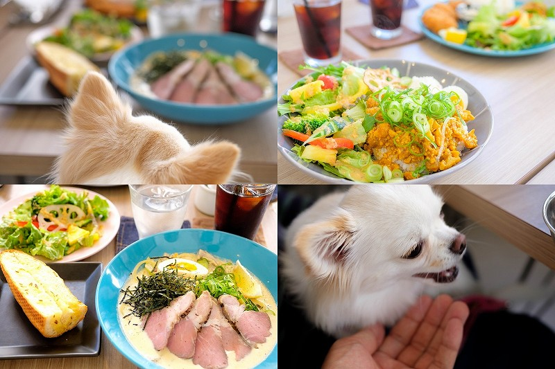 V's FORT CAFEで犬とランチ