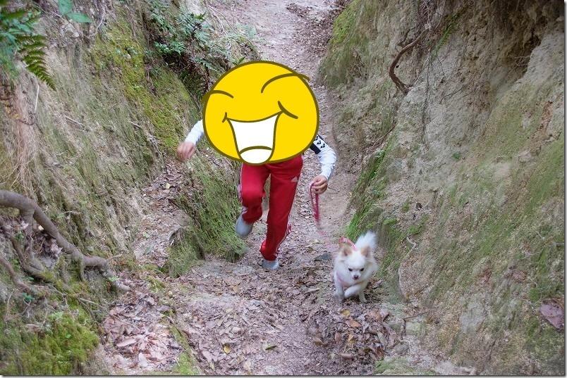 子供も「こむぎ」(チワワ・犬)も元気に山登り