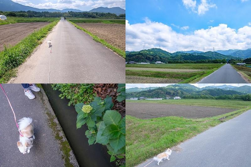 脇山中央公園を子供と犬と散歩