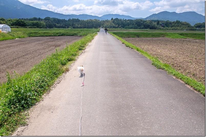 脇山中央公園の周辺を犬と子供と散歩、田畑の道