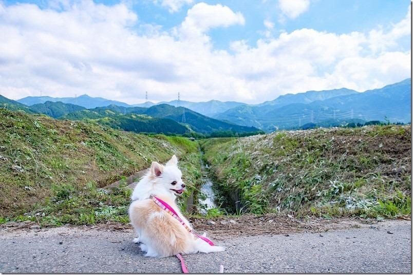 脇山中央公園の周辺を犬と散歩、きれいな山々