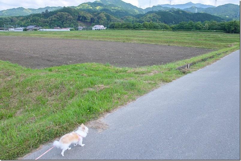 脇山中央公園の周辺を犬と散歩で周回