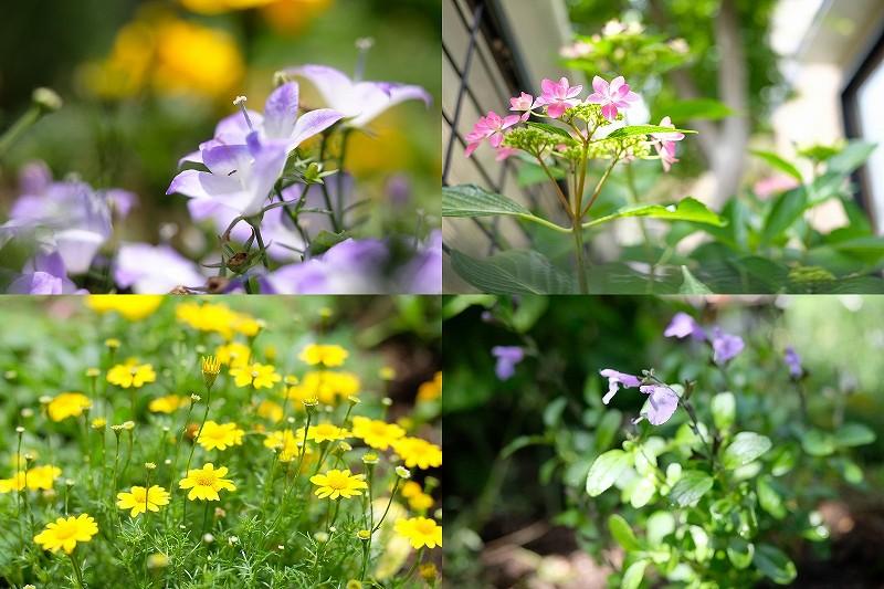 5月の庭に咲いた花