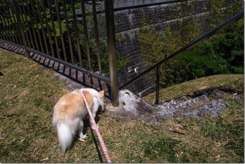 曲渕ダム公園からダムの上まで登ってみる。犬と