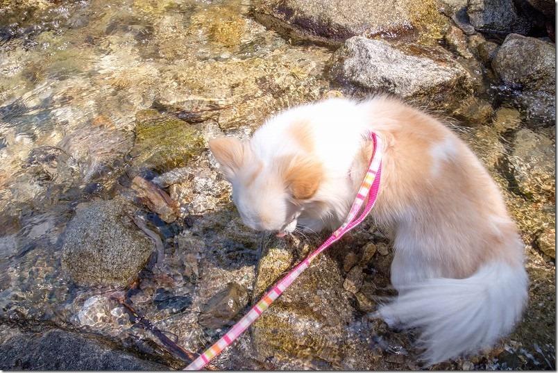 曲渕ダム公園周辺で水遊び犬と
