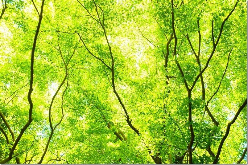曲渕ダム公園の新緑