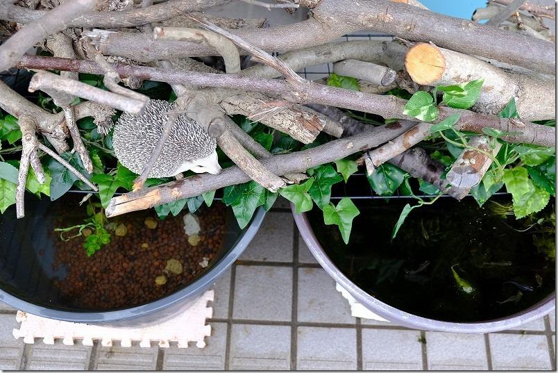 めだかの水鉢を伐採木で飾る