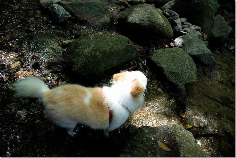 糸島・千寿院の滝と犬と水遊び