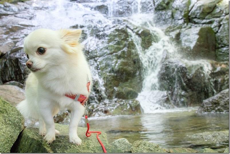 糸島・千寿院の滝と犬