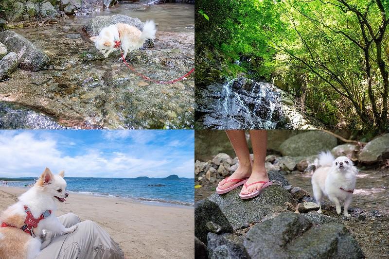 糸島・千寿院の滝で犬と水遊び