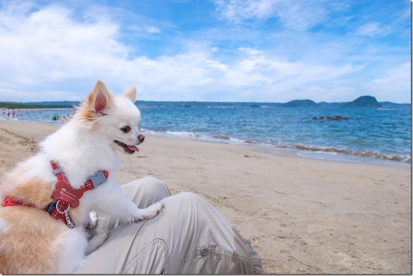 唐津・浜崎海岸で子供を見守る犬
