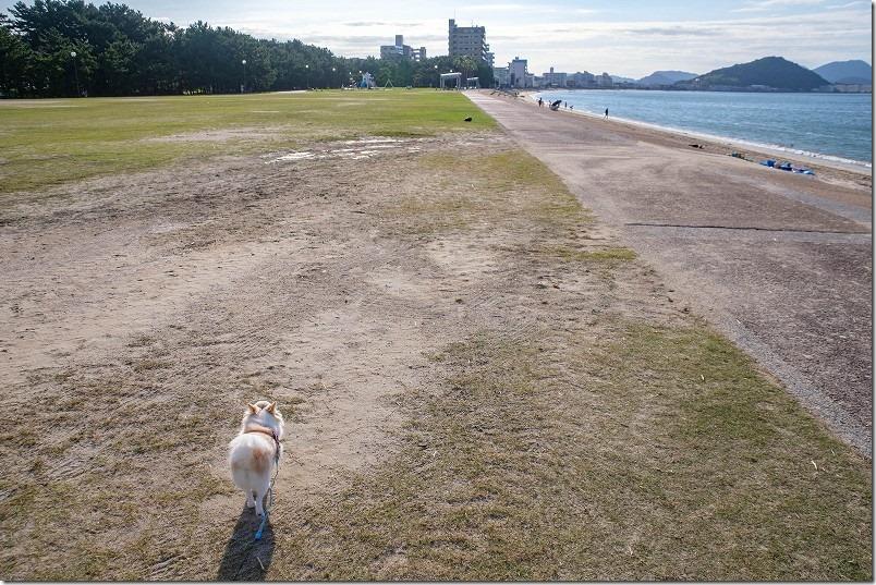 今宿「長垂海浜公園」を犬のお散歩
