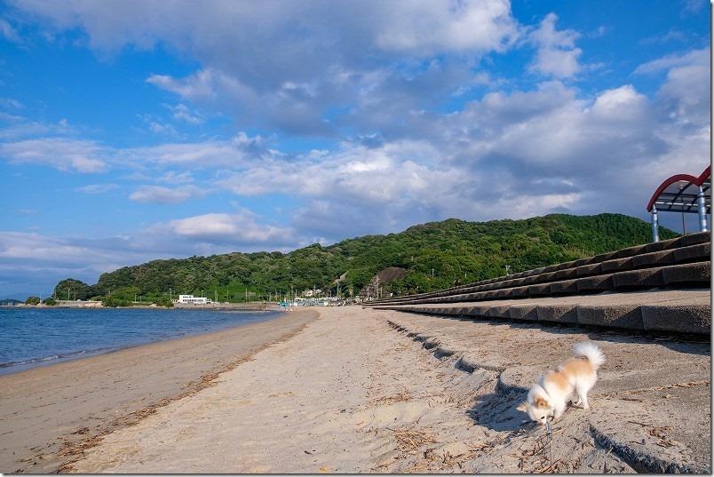 今宿「長垂海浜公園」の海と犬、チワワ散歩