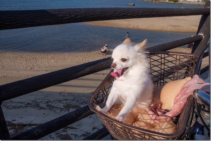 自転車で今宿「長垂海浜公園」へ犬のお散歩