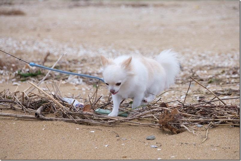 福浜海岸を犬とお散歩(福岡市中央区)