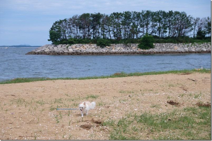 福浜海岸を犬とお散歩
