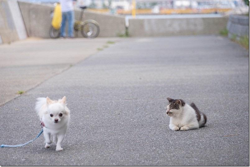 福浜海岸、伊崎漁港の猫ちゃんvsこむぎチワワ