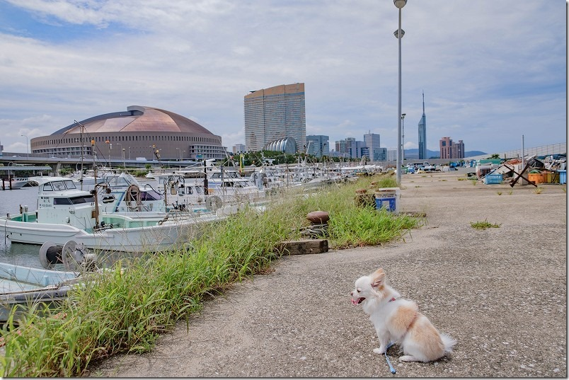 伊崎漁港を犬とお散歩(福岡市中央区)、福岡ドーム