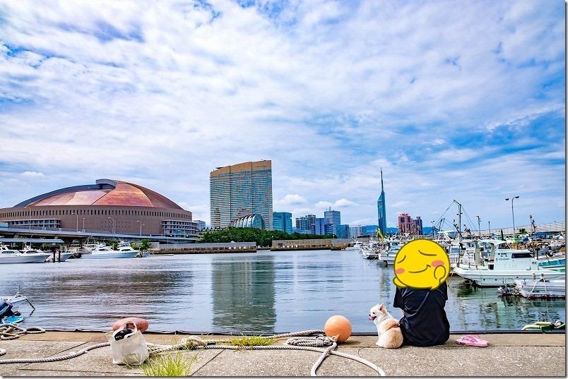 伊崎漁港から福岡ドーム、福岡タワー、犬の散歩