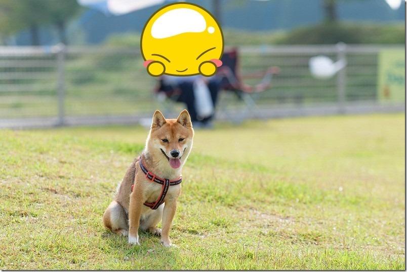 阿蘇・火の国ドッグラン(オートキャンプ場)の看板犬