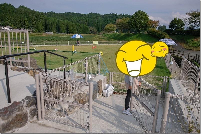 阿蘇・火の国ドッグラン(オートキャンプ場)をチワワ犬で体験
